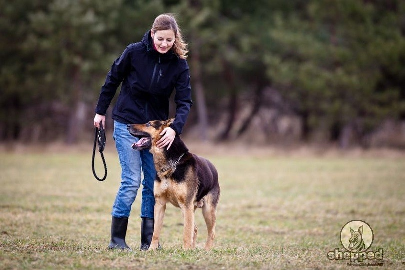 avoid the most common training mistakes for your gsd puppy shepped