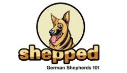 German Shepherd Owners Guide - From Pup To Pal