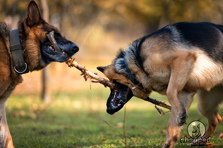 GSD Dominant Behavior