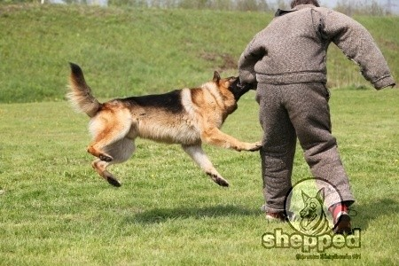 GSD Attack Training