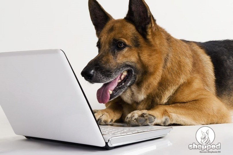 What Are The Most Commonly Used German Shepherd Names