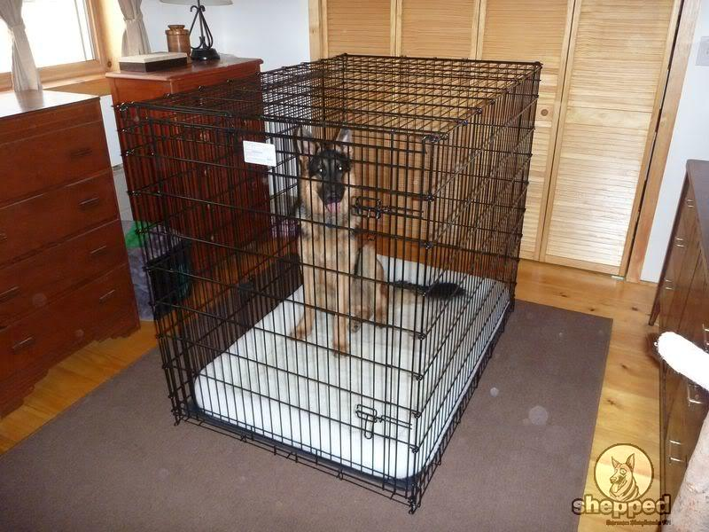 German Shepherd Crate Training