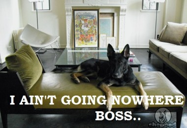 How To Stop Your German Shepherd From Ruining Your Furniture