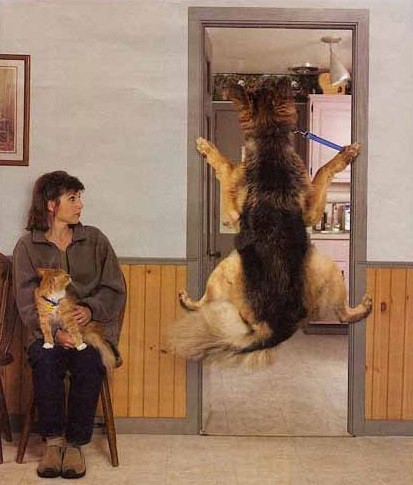 German shepherd refusing to see a vet