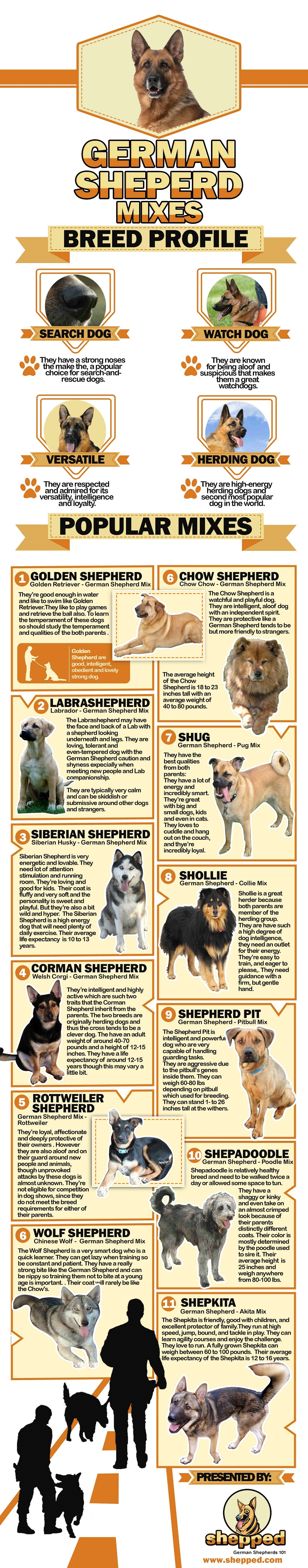 Most Popular German Shepherd Mixes