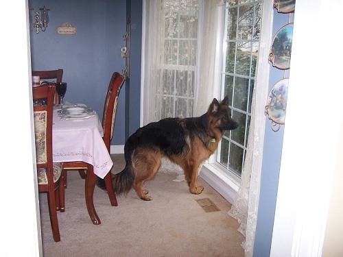 Waiting for Owner to Open Door