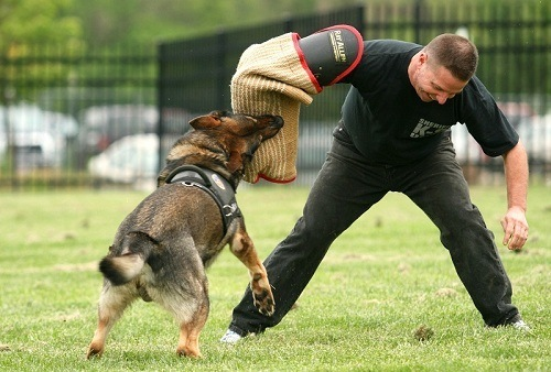 Training of K9 Dog