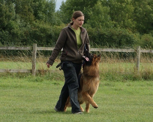 Training Your GSD