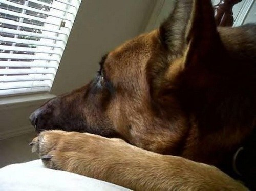 GSD Waiting with Sorrow