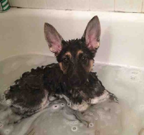 Warm Bath for GSD