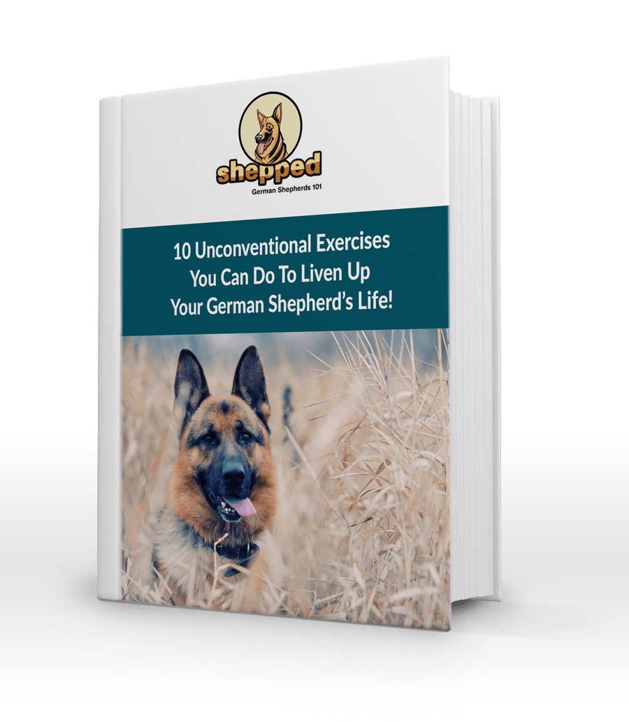 Unconventional Exercises for Your GSD