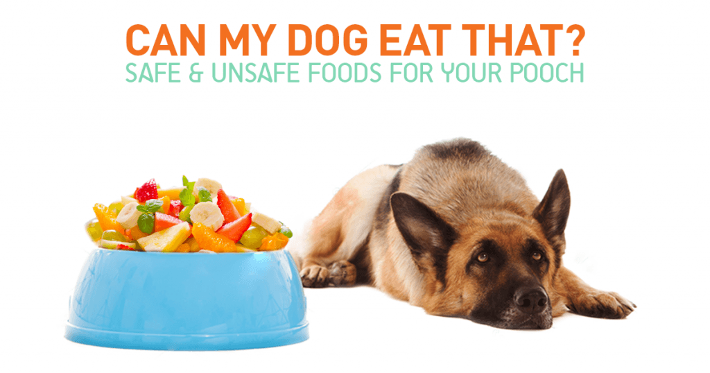 Can My Dog Eat That Safe And Unsafe Foods For Your Pooch
