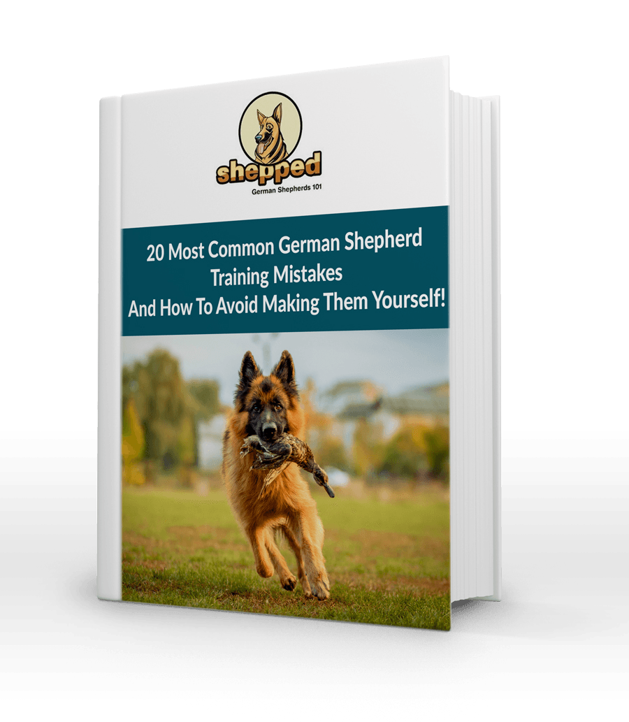 Common GSD Training Mistakes