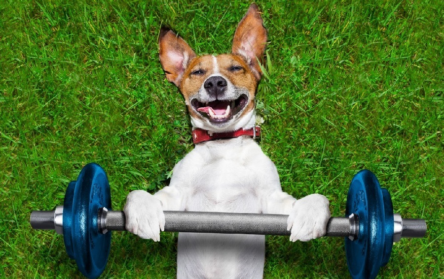 Fitness Food for Your Dog