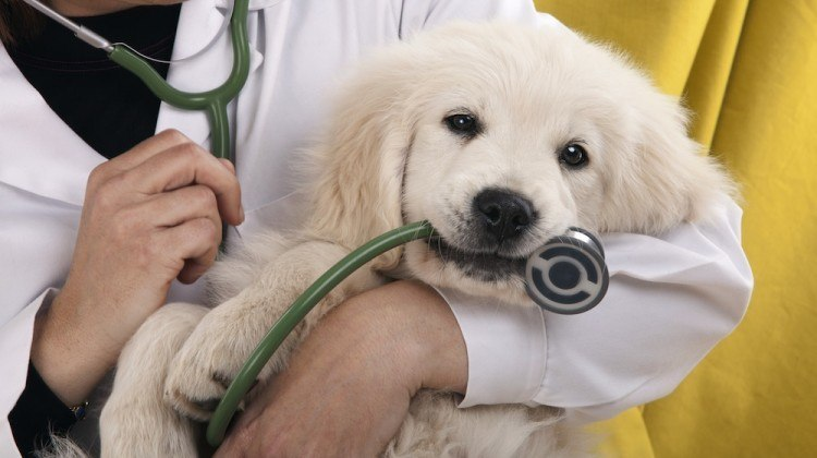Getting pet insurance for your dog