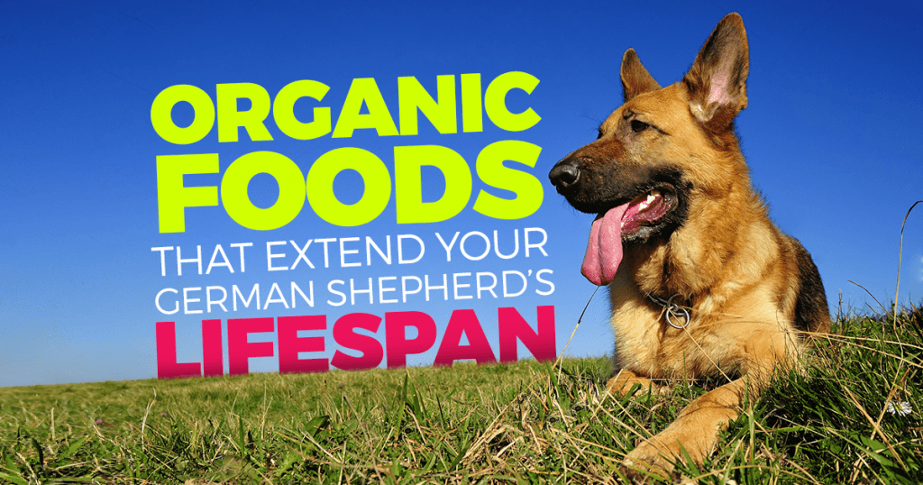 Organic Foods For German Shepherds