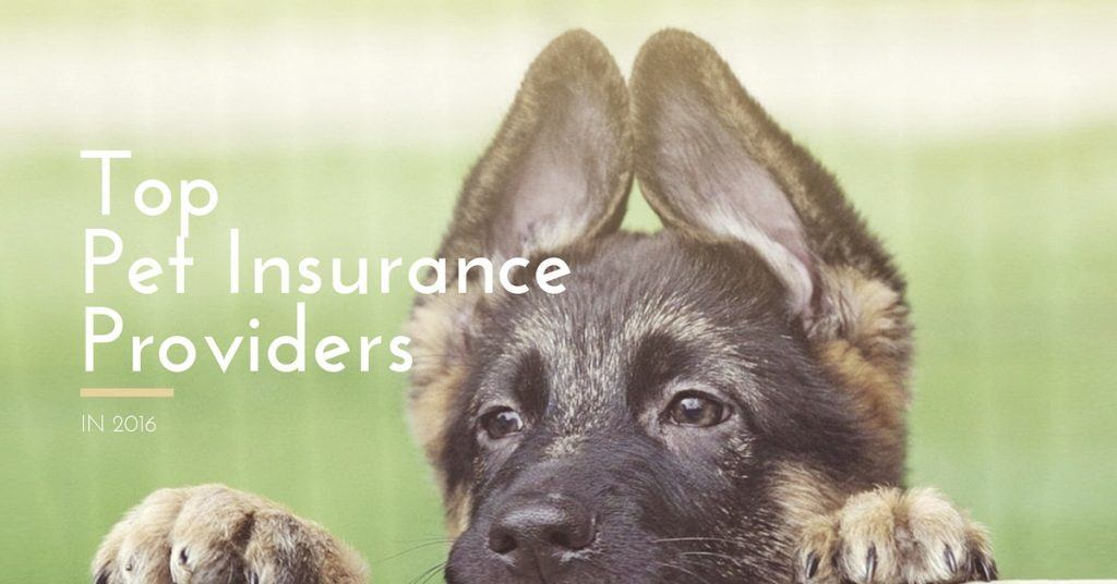 Top Pet Insurance Companies in 2016
