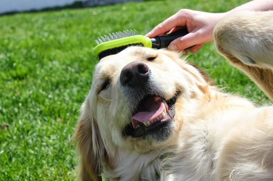 FURminator Dual Sided Grooming Dog Brush
