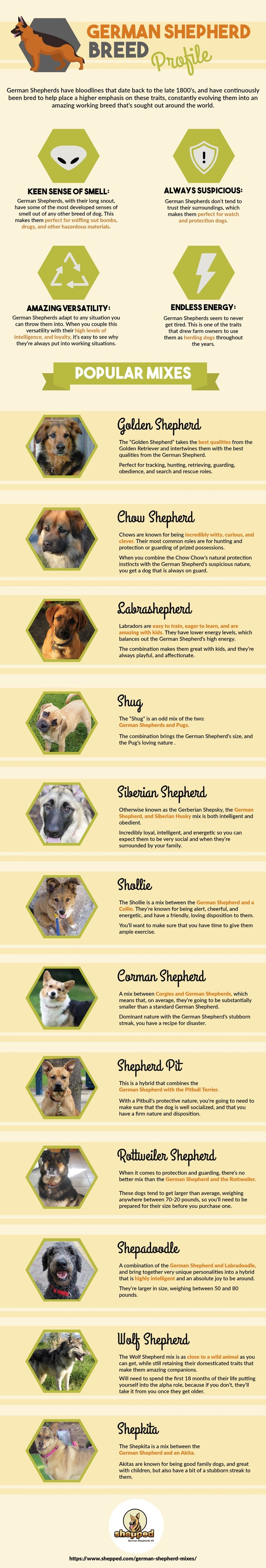 What Are The Most Popular German Shepherd Mixes | Shepped com