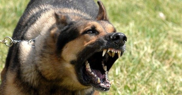 Breed Specific Legislation and German Shepherd