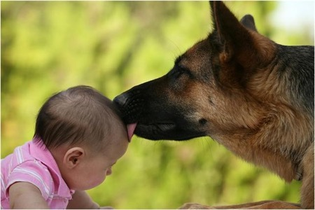 German Shepherd Dog And a Baby