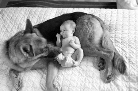 German Shepherd With a Baby