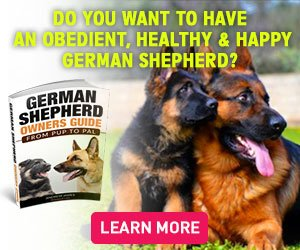 German Shepherd Training Without A Professional Trainer
