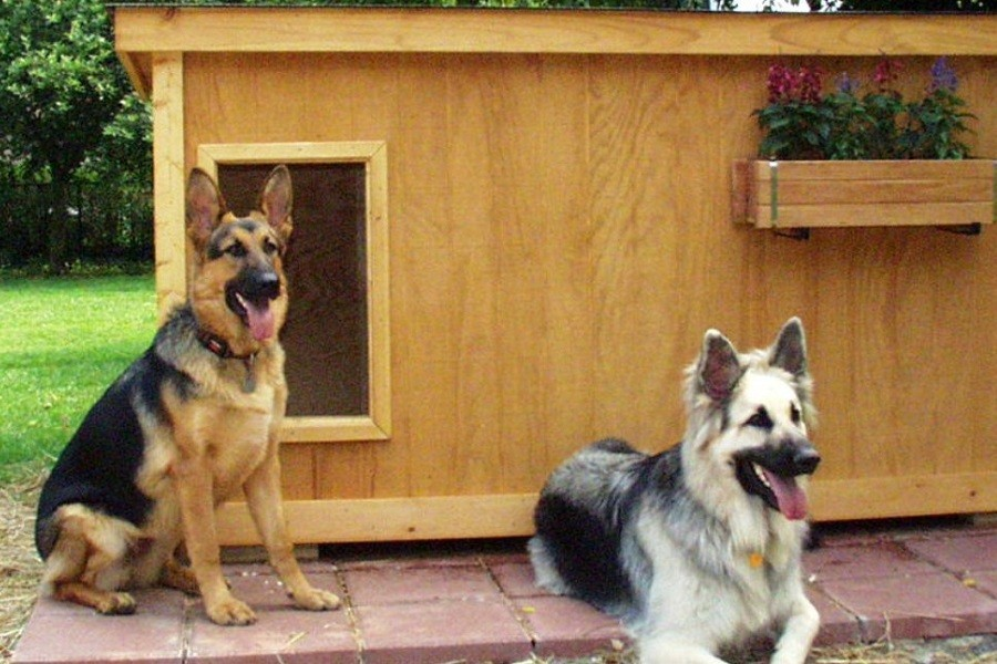 The Guide To Making A DIY Dog Crate