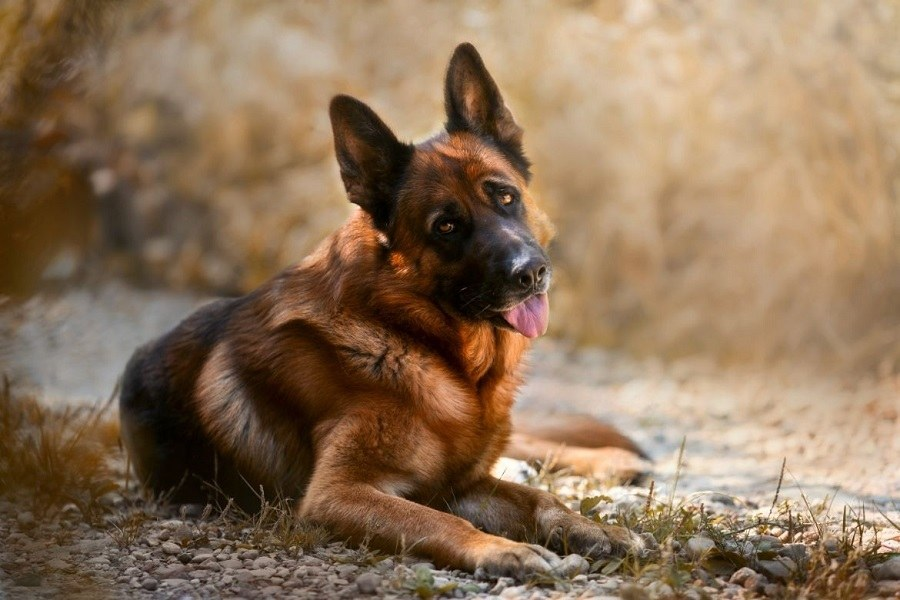 Boundary Training – Teach Your Dog To Obey