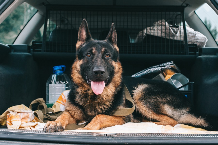 gsd traveling